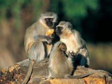 猴配什么生肖最好